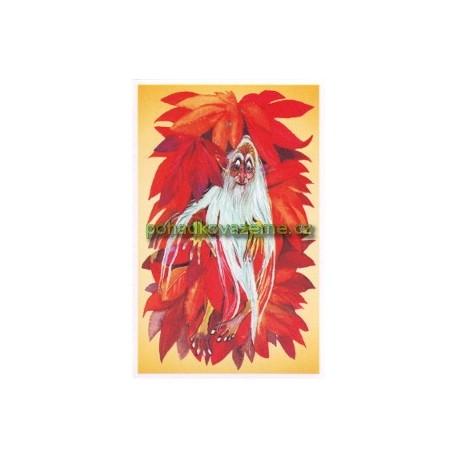 pohlednice - Dědoušek popínavý