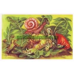 pohlednice - Skřítek spinkava